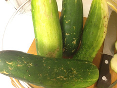 cukes from the csa