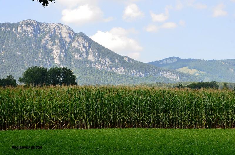 Corn field and Jura