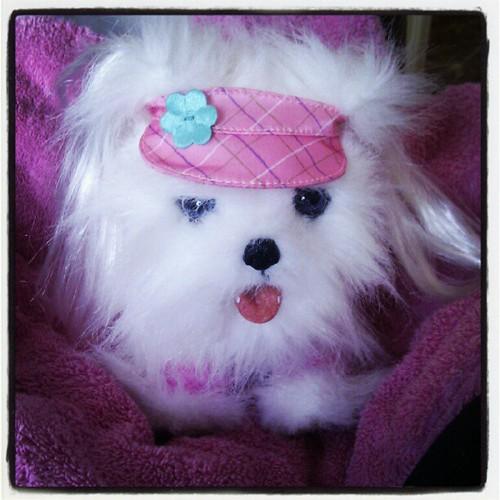 Ons prinses ... Liv haar nieuwe huisdier #lili has left the building