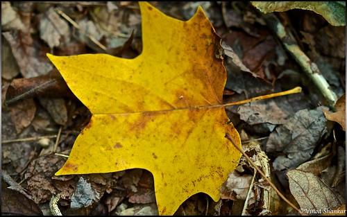 Rustling Leaf