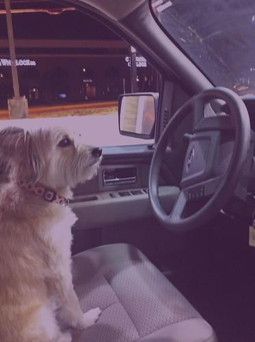 driving copy