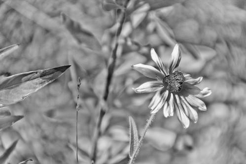 Flower-2 by jwill9311