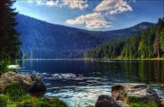 Sommer am großen Arbersee
