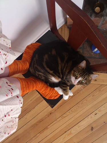 Socks and cat