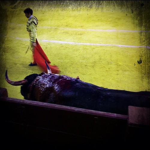 La soledad del toro