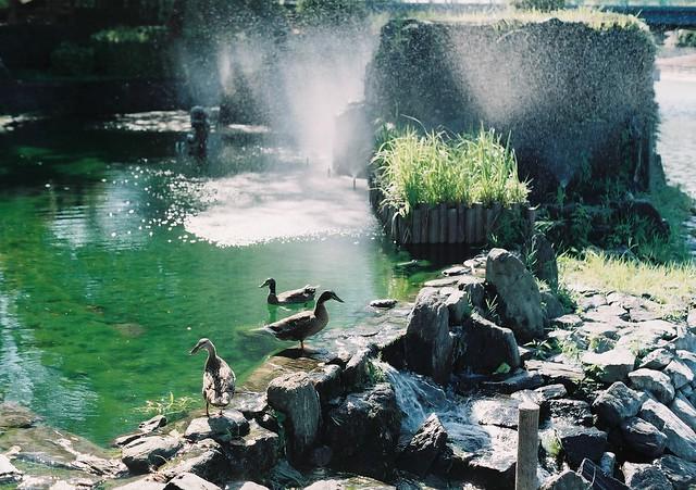徳島県吉野川市鴨島町鴨島公園