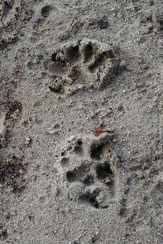 Pawprints Lakeside