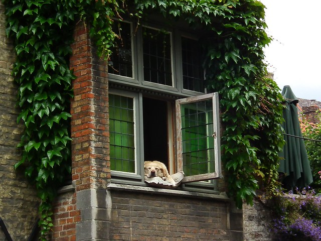 Dog in Window, Bruges