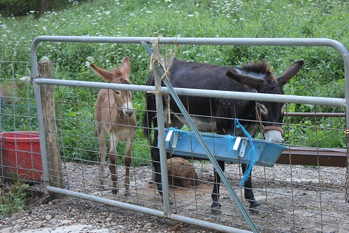 Hungry Donkeys