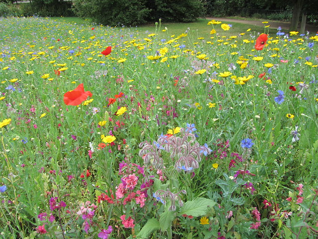Flowers in Hyde Park