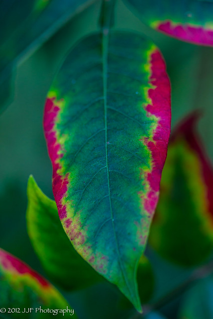 2012_Sep_05_Turning Leaves_015