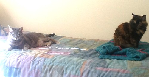 The cats on the bed