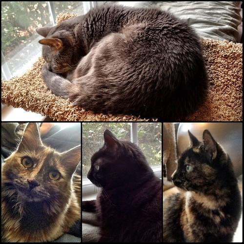 Sunday Catblogging (Clarity Edition) by eteckard