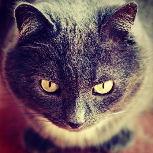 Cat below