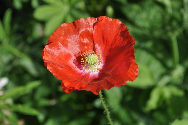 2012-08-19 garden 03