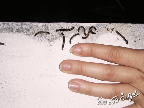 ภาพถ่ายตะเข็บโดย สว อิเฎล สงวนลิขสิทธิ์