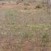 Angola impressions - IMG_2805_CR2_v1