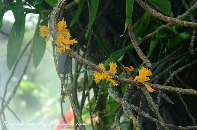 delicate blooms at cloud forest