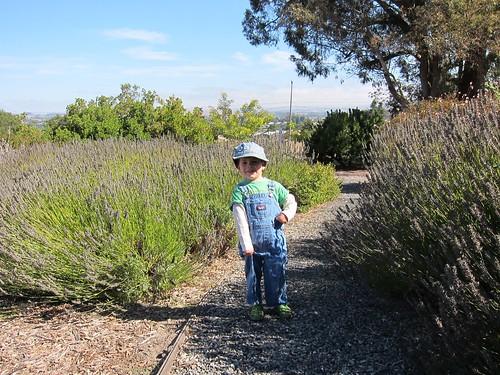 satchel in lavender