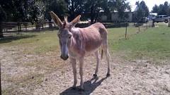 Donkey by spirit97