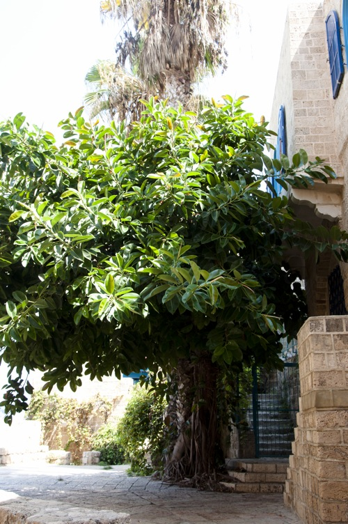 Tel Aviv (1 of 1)-9