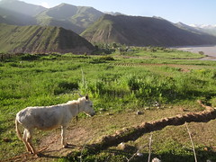 Visitar Tajiquistao
