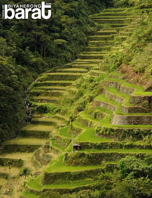rice terraces near batad saddle