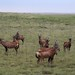 Etosha National Park impressions, Namibia - IMG_3532_CR2_v1