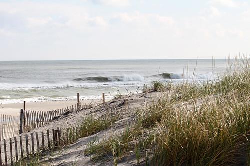 Seaside Fence w/shore birds