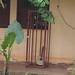 Yaounde impressions, Cameroon - IMG_2451_CR2_v1