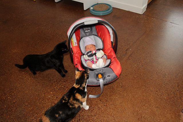 Harper meeting the cats