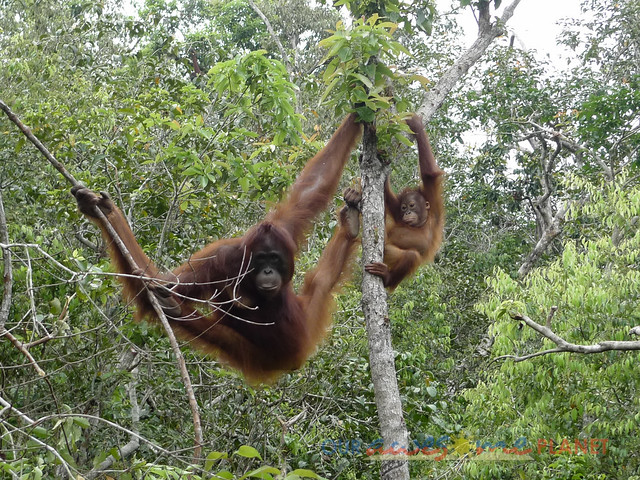 Orangutan World, Tanjung Puting Borneo Adventure-173.jpg