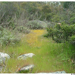 Meadow in San Mateo Canyon