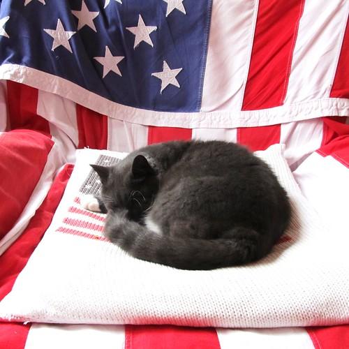 NATIONAL CAT