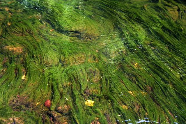 Stream algae