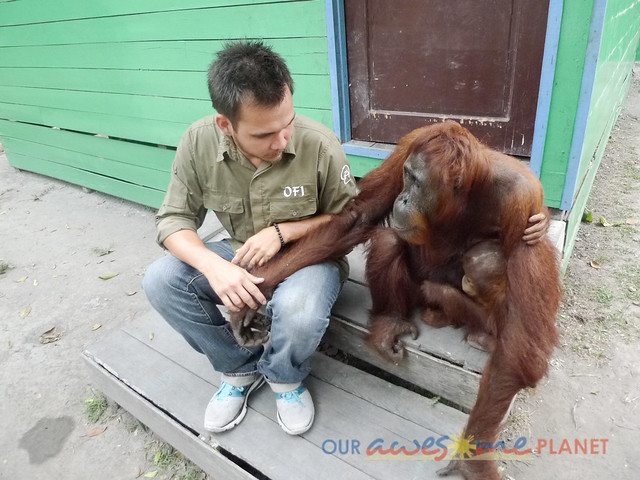 Orangutan World, Tanjung Puting Borneo Adventure-274.jpg