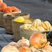 Harvest 2012 094