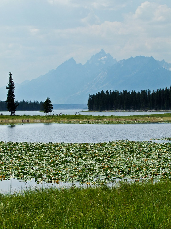 Wet Meadows on Heron Pond, with Grand Teton Range at distance, Grand Teton National Park