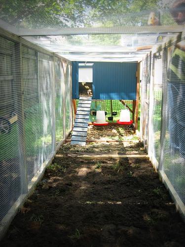 20120908. Extending the chicken run - chicken view.