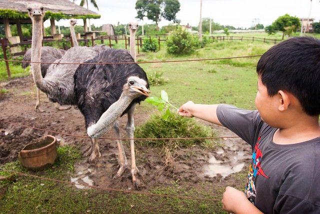 Feed the Ostrich