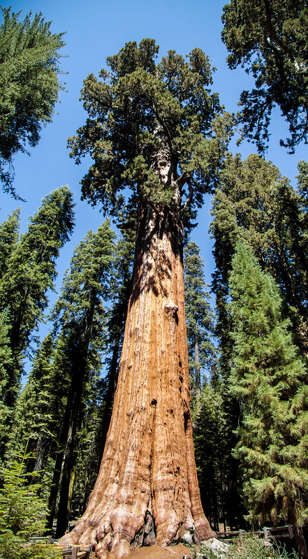 General Sherman, Giant Sequoia, World's largest tree