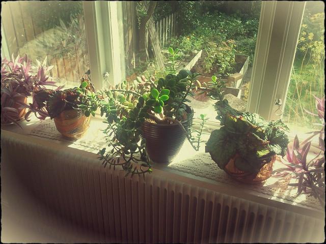 Nya blommor