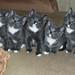 cats - коты