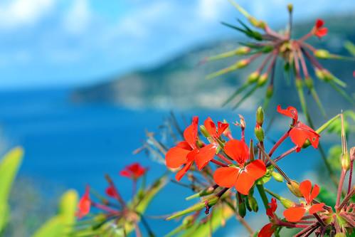 Flowers - Madeira.