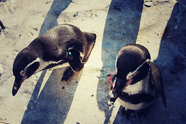 Cute penguins at the Woodland Park Zoo