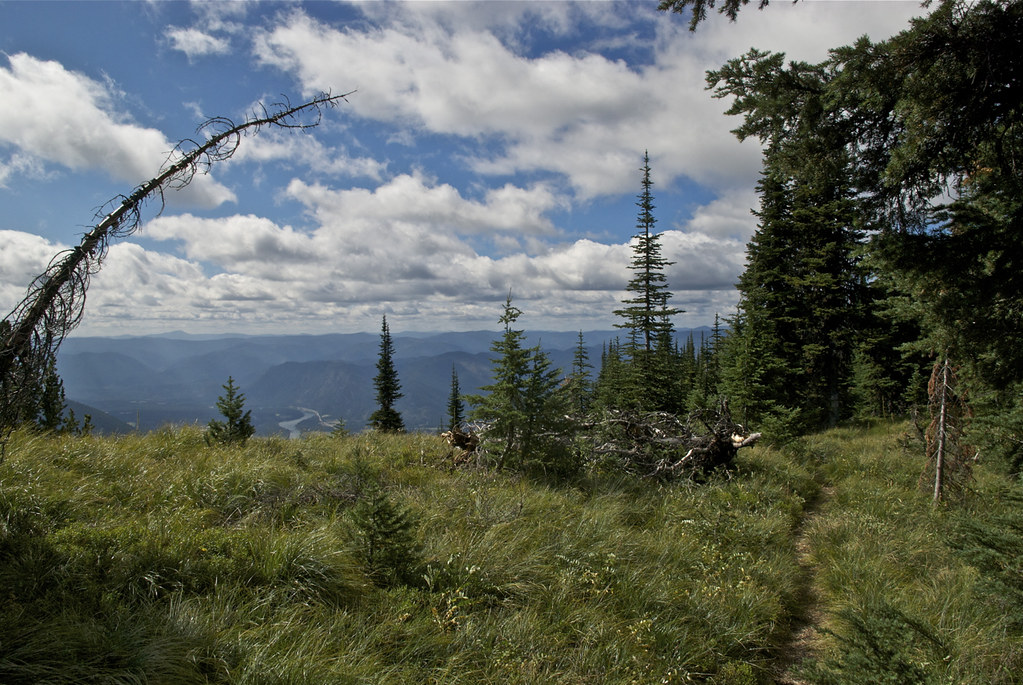 Trail 541