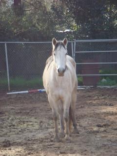 AQHA, horses