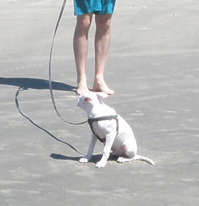 Puppy Hates the Beach