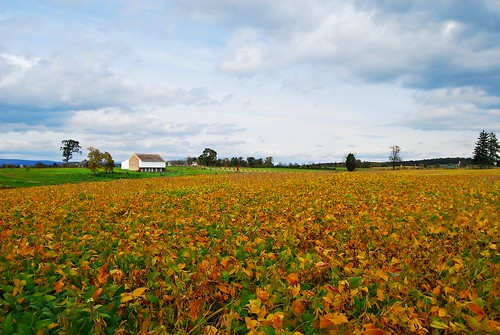 Fall Field by dogfrog