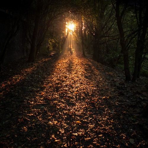 Autumn Fantasy : Let the Light Guide You (Bois de la Chartreuse, Liege) - Photo : Gilderic